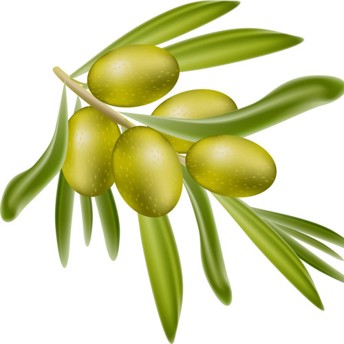 The Olive Branch (Lush type) Fragrance Oil for soap and candle making. From New York Scent