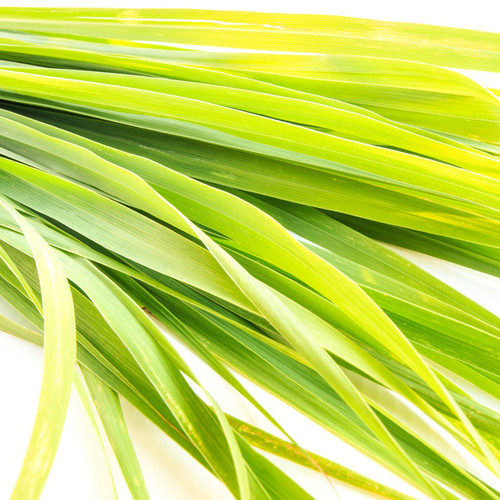 Lemongrass & Ginger Type Fragrance Oil for soap and candle making. New York Scent