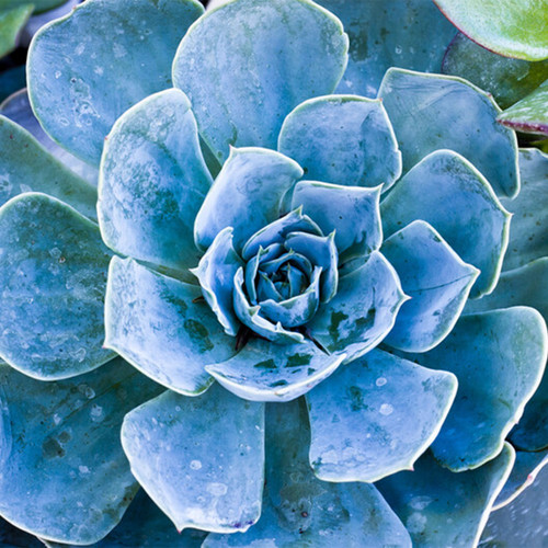Baja Cactus Blossom (BBW type) Fragrance Oil for Soap and Candle Making from New York Scent