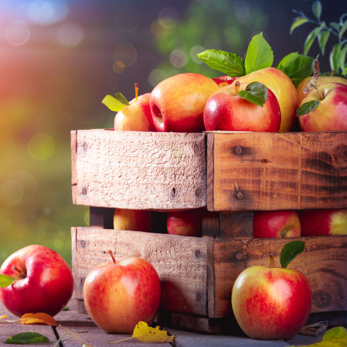 Apple Harvest fragrance oil for soap and candle making from New York Scent