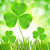 Green Clover & Aloe (Bath & Body Works type) Fragrance Oil for Soap and Candle Making from New York Scent