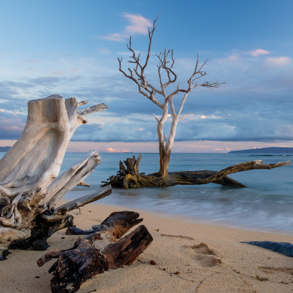 Ocean Driftwood (BBW Type) fragrance oil for soap and candle making from New York Scent