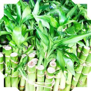 Luck Bamboo FAQ