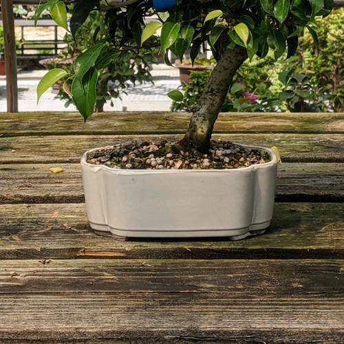 Cream Glazed Bonsai Pot