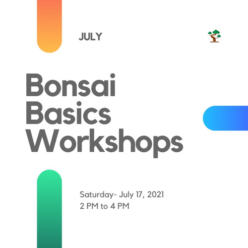 Bonsai Basics Workshop (Saturday - July 17, 2021) Afternoon Session