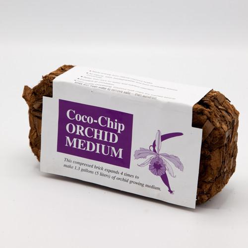 Coco-Chip Orchid (Medium)