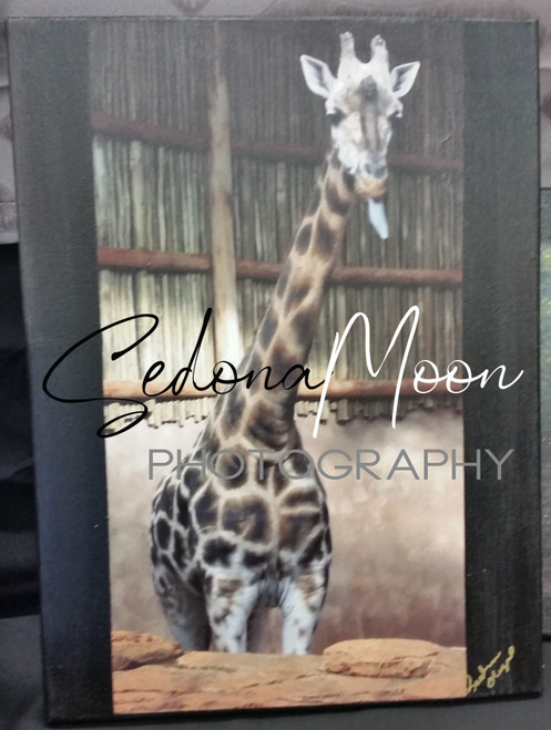 Sedona Moon Digital Photos on Canvas-Chi Giraffe