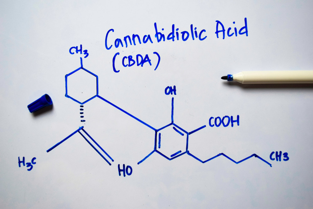 An Inside Looking into the Cannabinoid Known as CBDA