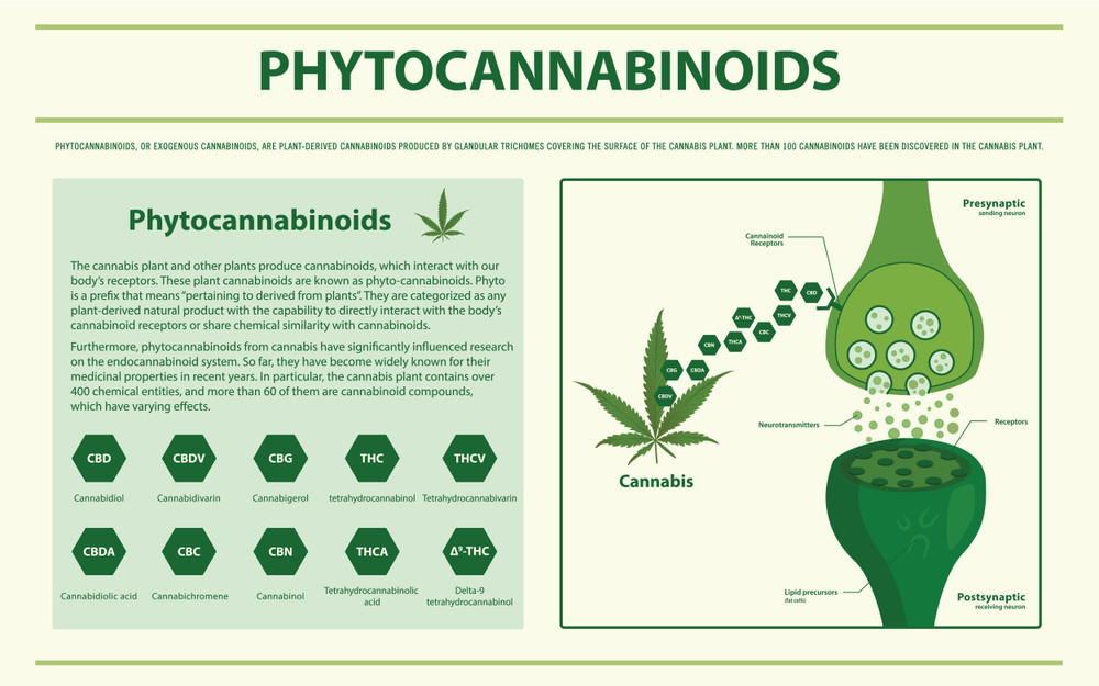 Phytocannabinoids – What They Are and Their Effects