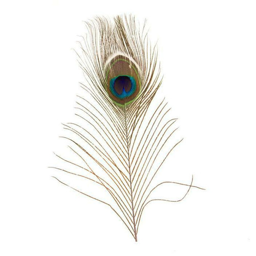 Peacock Eye Hat Feather by Fashion West F-PE