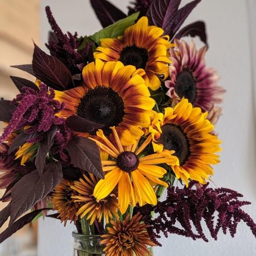 10 Week Cut Flower Subscription