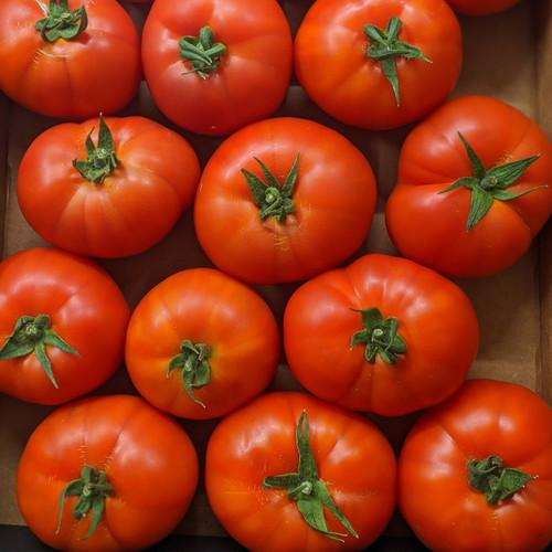 Organic Slicing Tomatoes