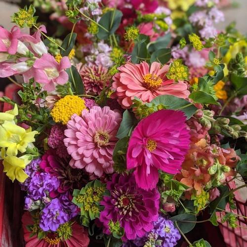 All Season Cut Flower Subscription (18 weeks)