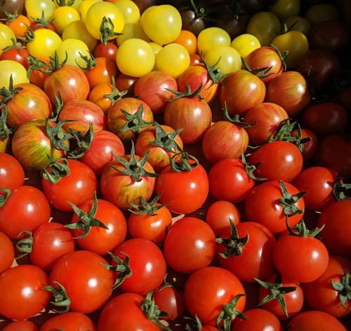 Tomato Seedlings: Cherries