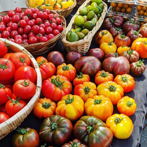 Tomato Seedlings: Heirlooms