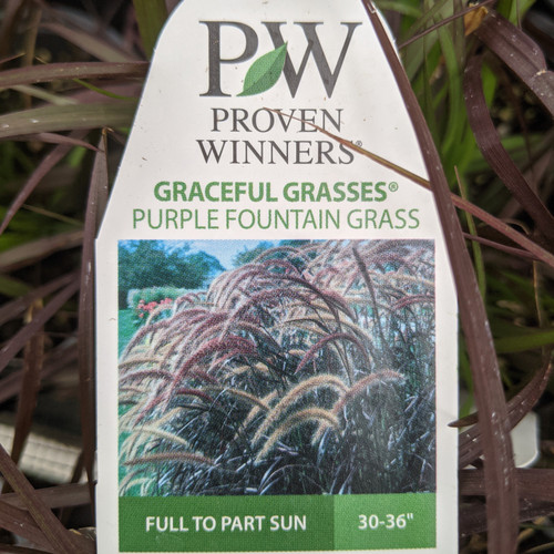 Grasses, Decorative