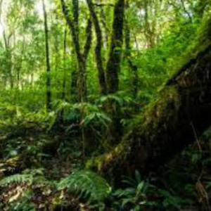 Aromatic Forest Fragrance Oil MakeYourOwn