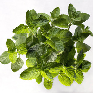 Spearmint 65% Essential Oil MakeYourOwn