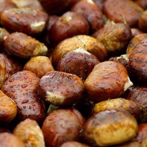 Chestnut & Birch by BBW Type Fragrance Oil