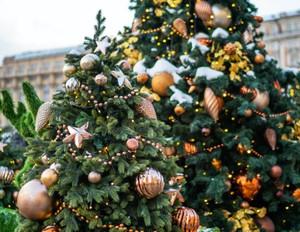Oh Christmas Tree Fragrance Oil