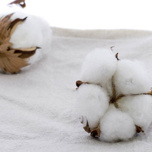 Clean Cotton by Yankee® Type Fragrance Oil MakeYourOwn