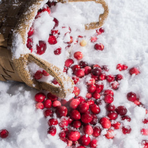 Frosted Cranberry Fragrance Oil
