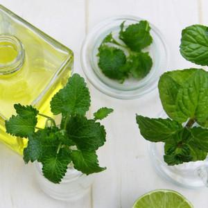 Eucalyptus, Mentha, Lavender, Rosemary Essential Oil Blend