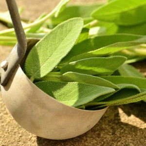 Sage & Sandalwood Fragrance Oil