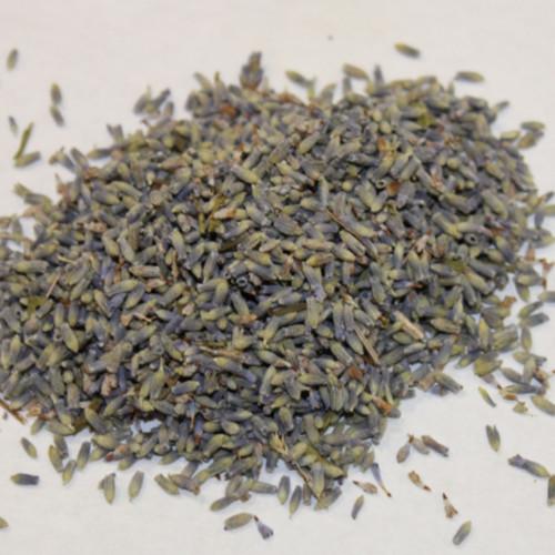 Lavender Flower Buds Ultra Blue