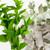 Eucalyptus Spearmint oil MakeYourOwn