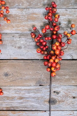 Fall Orange Crab Apple Spray