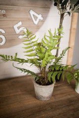 """19"""" Potted Fern"""