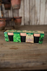 Terracotta Herb Pots - Set of 3