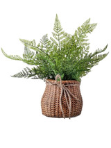 """14"""" Lace Fern In Cement Bag"""