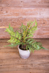 """17"""" Potted Fern"""