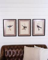 "15"" x 20"" Framed Bird Print with Glass"