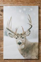 """16x24"""" Buck Deer In Snowy Field Print"""