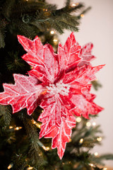 """22"""" x 13"""" Red/White Frosted Poinsettia Stem"""