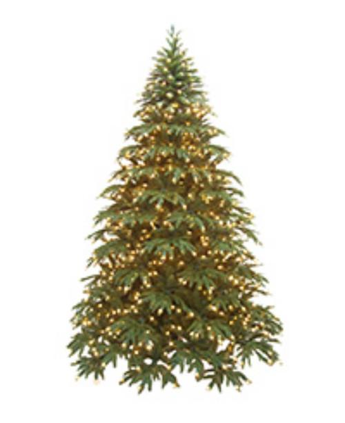Greenland Fir Christmas Tree