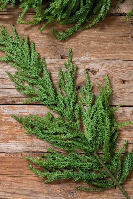 """38"""" Natural Touch Norfolk Pine Christmas Tree Spray"""