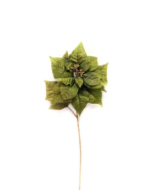 Florentine Poinsettia