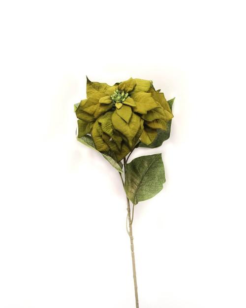 Poinsettia stem