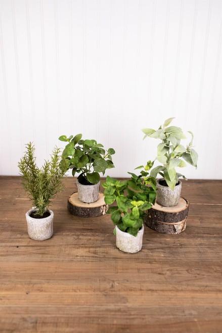 """9"""" Herb in a Pot"""