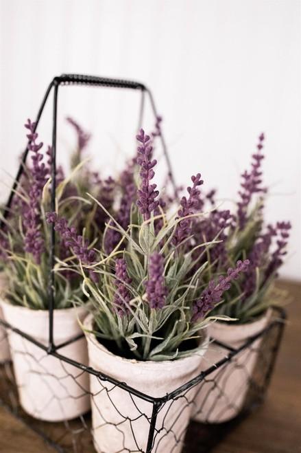 """12"""" Potted Lavender Plants- Set of 6"""