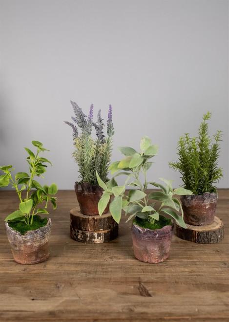 "9"" Herb In Rustic Clay Pot"