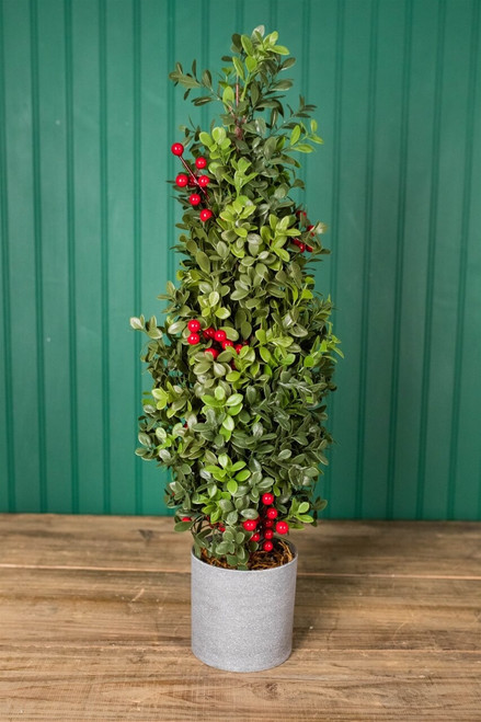 """20"""" H Holiday Potted Boxwood Tree W/ Berry"""