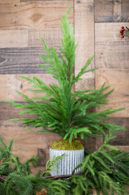 """28"""" Potted Norfolk Real Touch Pine Tree"""