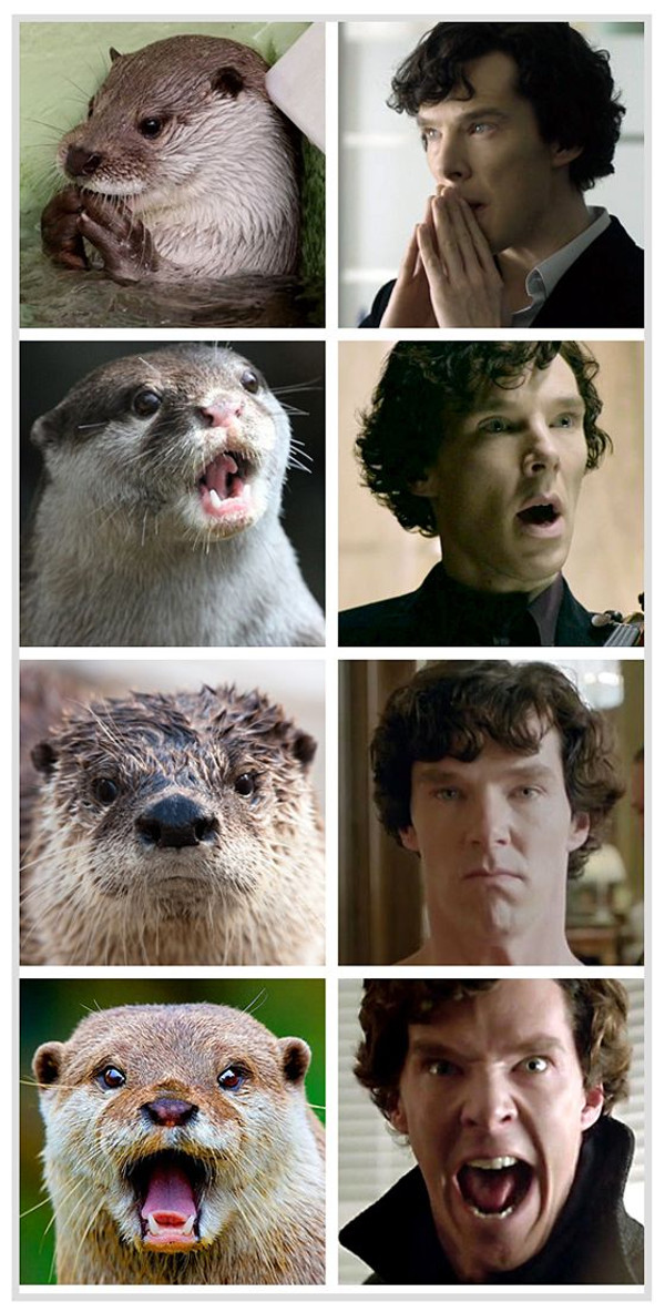Benedict Cumberbatch is an otter