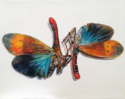 Augustina Droze: Pair of Moths