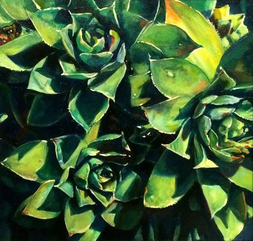 Augustina Droze: Succulents
